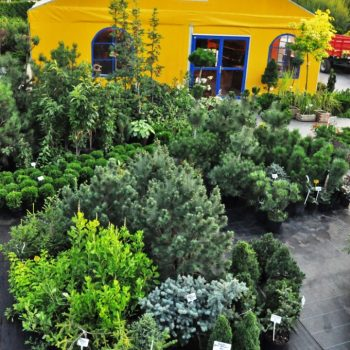 Sklep ogrodniczy z roślinami ozdobnymi Białystok