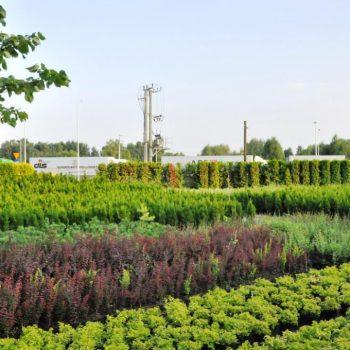 Rośliny ozdobne w sklepie ogrodniczym w Białymstoku
