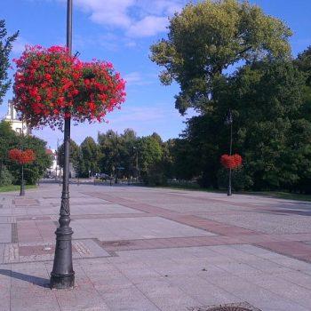 Drzewa alejowe na plantach z centrum Ogrody Marka - Białystok