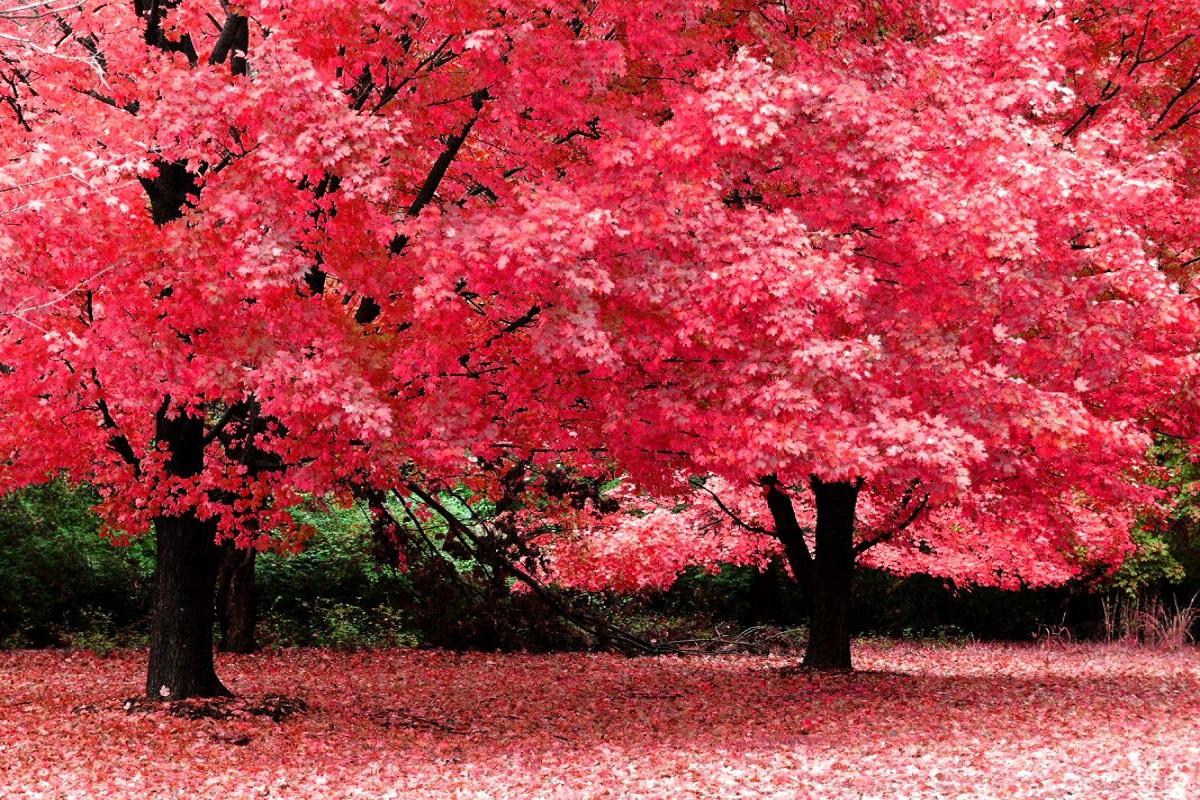 białostockie ogrody jesienią