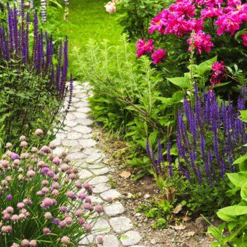 Kwiaty ozdobne ze sklepu ogrodniczego