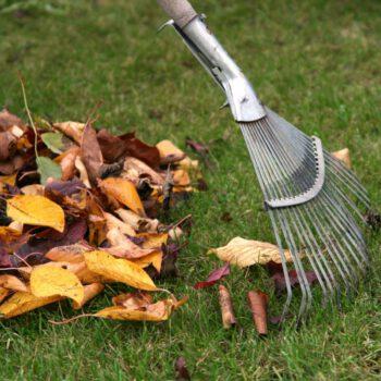 Pielęgnacja białostockich ogrodów jesienią